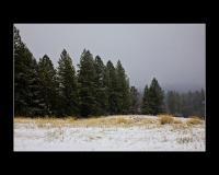 Snowey afternoon at on the Ridge at Ananda