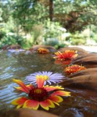 Flowers floating in a fountain