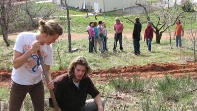 Rachel and Steven digging, while the group mills around in the experimental orchard