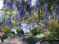view-of-shrine-of-the-masters-through-wisteria.JPG