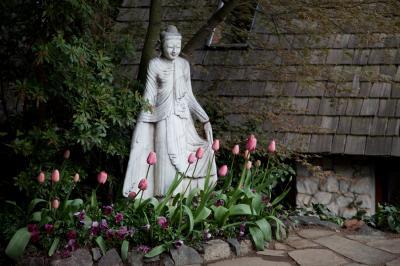 tulips-4-10-20-of-36.jpg