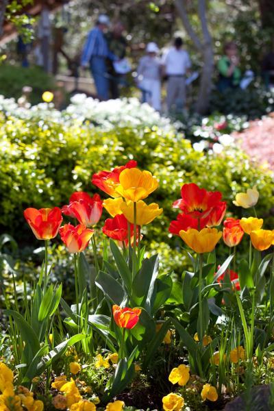 tulips0081.jpg