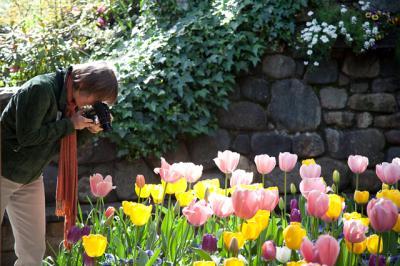 tulips013.jpg