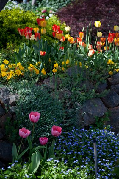 tulips016.jpg