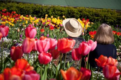 tulips017.jpg