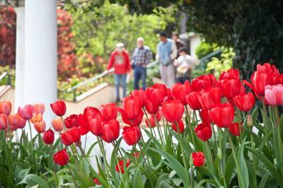 tulips021.jpg