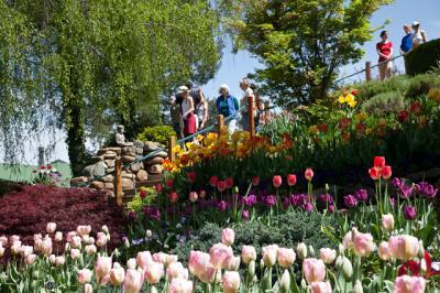 tulips022.jpg