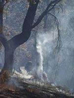 charredtrees.jpg
