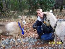 goats with kalidas hansen