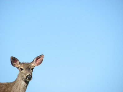 A deer on the blue background of summer sky